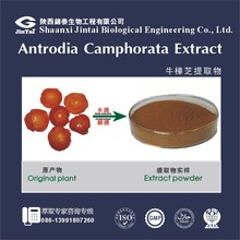 natural triterpene 6% Antrodia Cinnamomea Mycelia Extract
