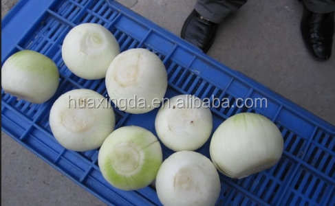 artificial hand onion peeling machine/dry onion skin peeling machine with cut root