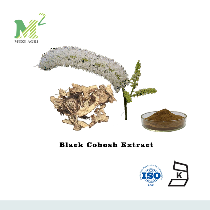ISO certified Black Cohosh Extract for Menopause