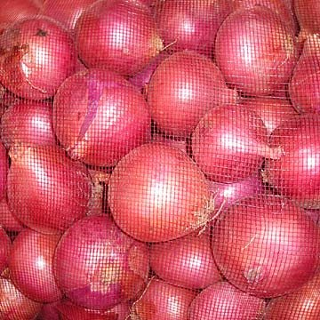 onion red onion