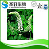 Manufacturer Supply Black Cohosh root