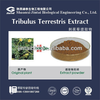 tribulus extract 40% 60% 80% 90%