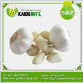 factory price normal white garlic price packed in 10kgs/ctn