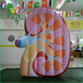 Custom Giant Air Heart Liver Lung Spleen Kidney Human Body Organ Replica Model / Inflatable Kidney Organ for Display