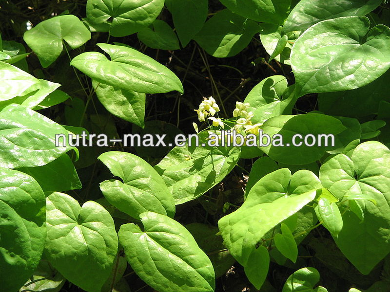 Epimedium Plant Extract Herbal Extract Supplement 4:1 5:1 10:1