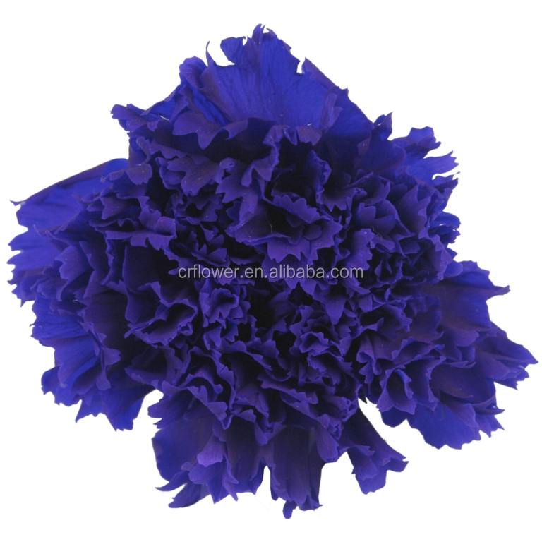 Exporters of A grade preserved flowres carnations in bulk from kunming
