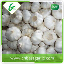 New crop fresh natural garlic white garlic with best garlic price