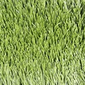 Chinese football turf carpet soccer artificial grass