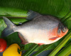 300-500g chinese farmed rozen red pacu red pomfret fish