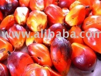 Fresh Palm Oil