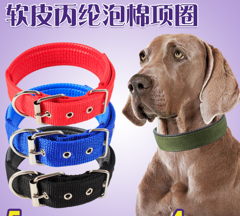 classic pet dog accessories blue nylon webbing dog collar for outside lead dog