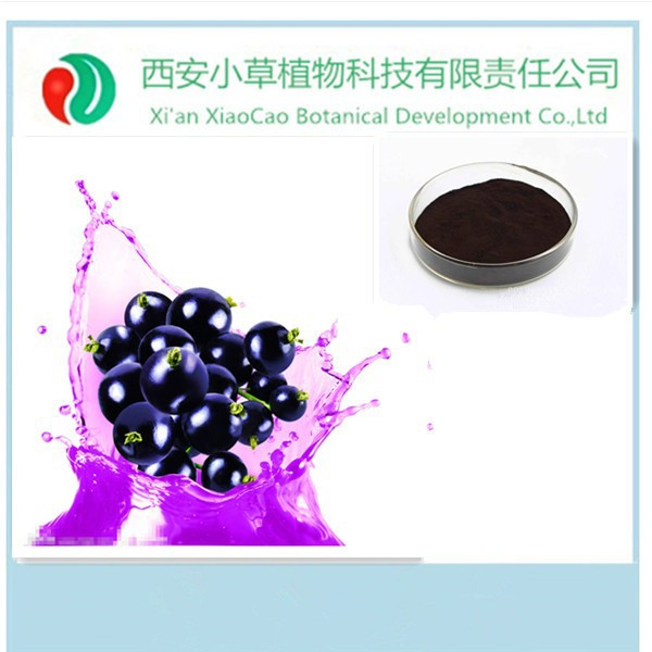Pure Natural Proanthocyanidins Anthocyanins Blueberry extract/Blueberry Fruit Powder