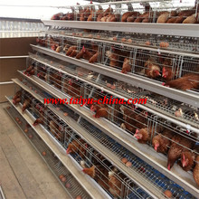 Free sample, no risk, export record for your reference chicken cage