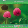 Red Clover Extract,Red Clover Extract Powder,Red Clover powder