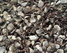 Dry truffle from 2015 crop