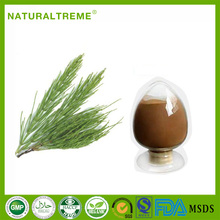 Natural herb Equisetum arvense L powder wenjing extract
