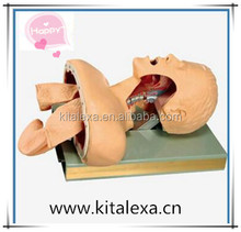 High selling supply of advanced human tracheal intubation training model