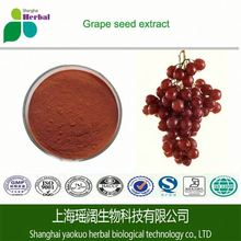 100% Natural Grape Seed Extract wholesale, Pure 95% OPC Grape Seed