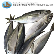 China hot products high quality horse mackerel frozen whole round scad fish