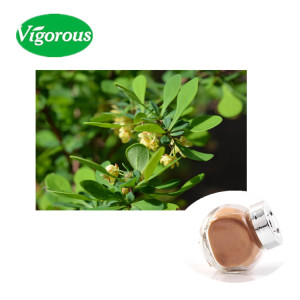 Indian Barberry ( Zarishk ) 2% berberine powder Berberis aristata extract