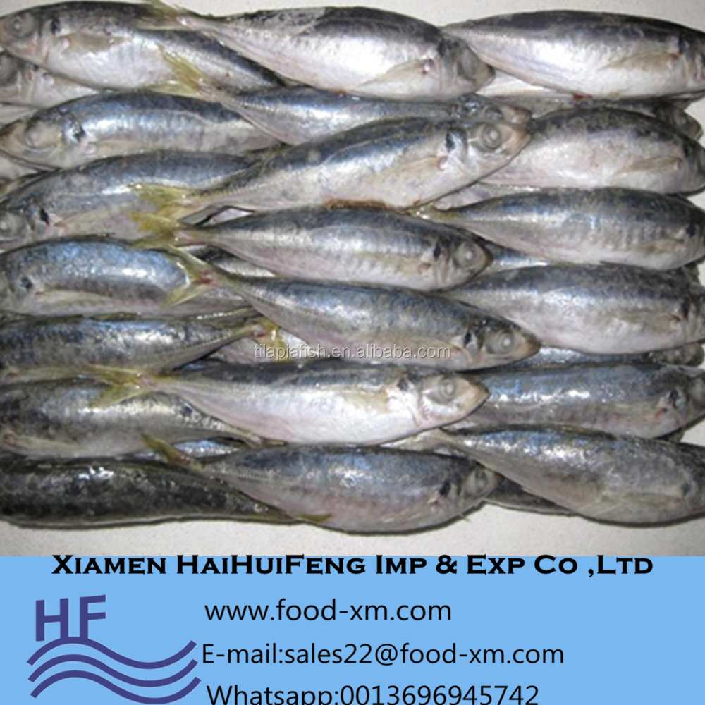 Land Frozen/ Board Frozen horse mackerel in good price