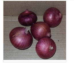 Fresh Onion from Pakistan ( Naqshbandi Enterprises )