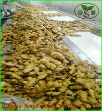 NEW GINGER !Exports in southeast Asia/India/dubai, Pakistan and other countries