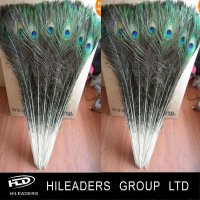 LO282 Dyed Indian Peacock Feathers For sale