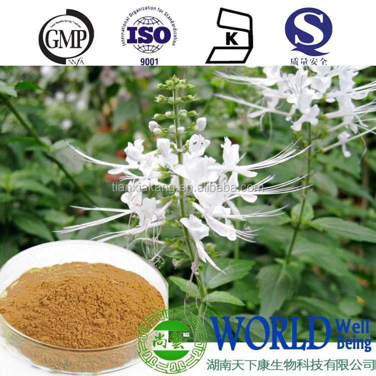 factory supply spicate clerodendranthus herb extract 10:1healthy supplement Orthosiphon extract powder