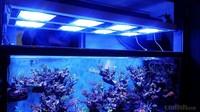 5 LED channels led aquarium light coral reef hat clip light arowana fish price dropship
