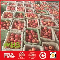 Chinese Shandong fresh fuji apples for export