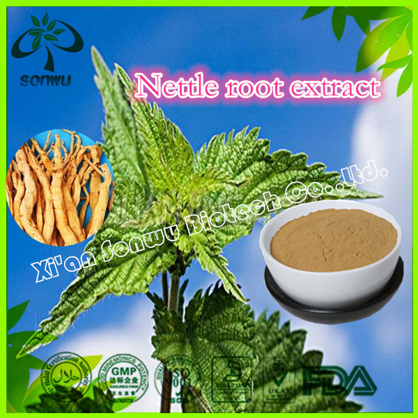 Hight quality nettle root extract/nettle extract/nettle