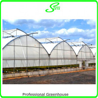 Multi-Span Agricultural Greenhouses Type and PC Sheet Cover