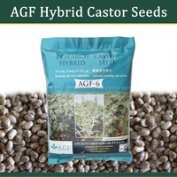Castor Seeds For Plantation