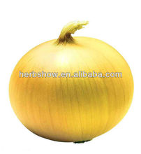 F1 Hybrid Onion Seeds for planting