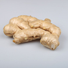/product-detail/china-new-fresh-specification-dry-ginger-60460077258.html