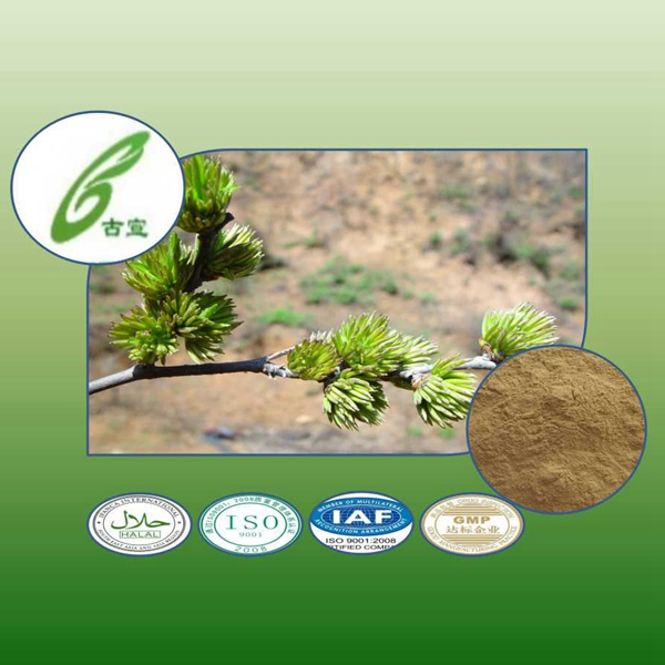 100% natural Eucommia ulmoides/rubber tree extract to provide external treatment of plant extracts