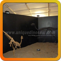 Animal Skeleton Replica From Zigong Dinosaur Factory