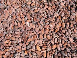 Grade A Dried Cameroon Raw Cocoa Beans for Sale