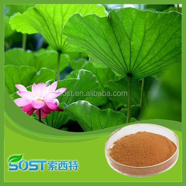 100% Natural plant extract nuciferine lotus leaf extract