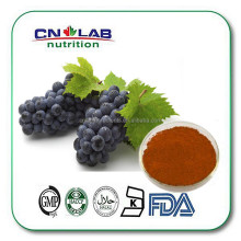 Top quality Grape seed Extract, free sample for initial trial, Grape Seed Dry Extract in bulk supply