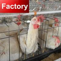 500 dollars coupon full automatic chicken poultry farm equipment
