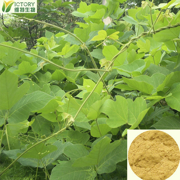 high quality pueraria p.e. extract to aphrodisiac for women