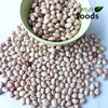 Speckled Kidney All Variety Beans
