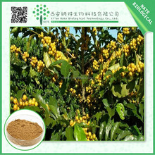 Free sample pure natural green coffee bean extract chlorogenic acid powder 60%
