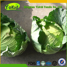 Chinese small artificial cabbage for sale