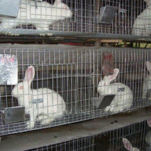 Trade Assurance A Type H Type Cheap Galvanized Welded Rabbit Cage Wire Mesh Rabbit Cages