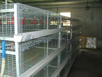 Sell To Nigeria Chicken House 4 tiers 400 chicks cage baby chicken layer cage HJ-YC400
