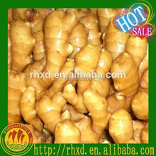Indonesia fresh ginger