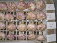 FRESH GARLIC 5 cm up carton packing